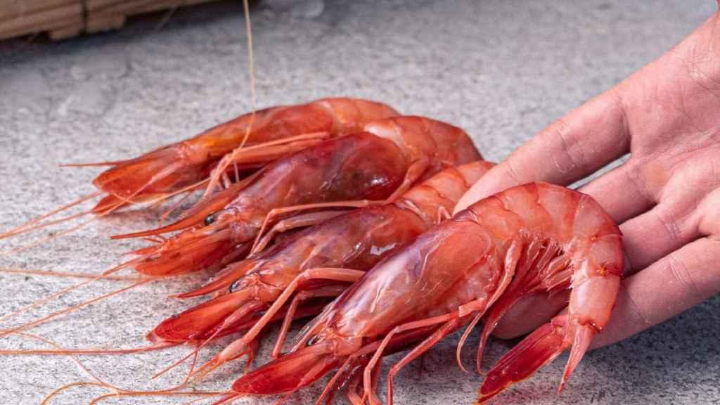 El sector pesquero se reinventa: se suma al 'Black Friday' con productos de alta gama