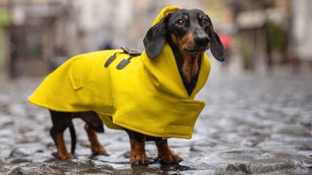 ¿Quieres que tu perro sea el más estiloso? Descubre los chubasqueros y abrigos para perros más vendidos en Amazon