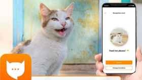 MeowTalk, la app que traduce maullidos.