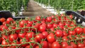 Invernaderos solares, hortalizas sanas y sabrosas contra el cambio climático