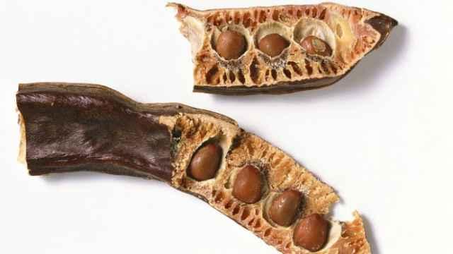 5 legumbres olvidadas en España que debes recuperar para tu salud y tu dieta
