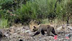 Foto oso