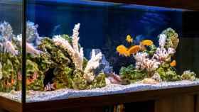 Los mejores acuarios y accesorios para tener peces en casa