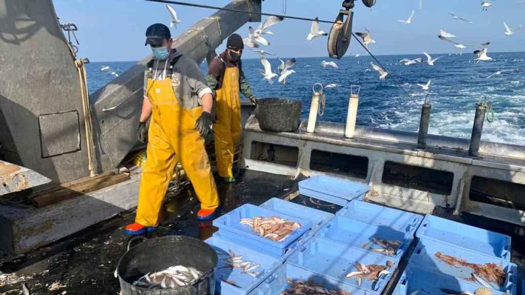 La pesca española dispondrá de una transición de 5 años y medio tras el brexit