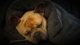 5 señales para saber que tu perro tiene frío