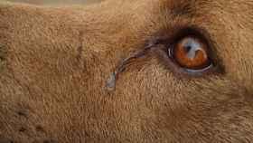 ¿Por qué mi perro llora mucho?