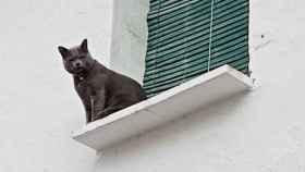 La esterilización de las colonias de gatos callejeros empezará a finales de enero en Daimiel