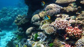 Gran Barrera de Coral. Wikipedia.