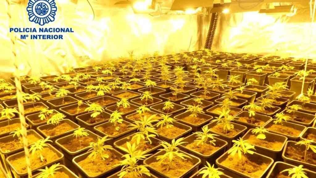 El problema eléctrico en Cañada Real (Madrid) tiene un nombre: cultivo de marihuana