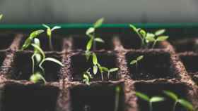 El capital semilla es esencial para el desarrollo de las empresas emergentes.