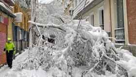 Imagen del daño que ha causado la nieve que ha caído este fin de semana en Madrid.