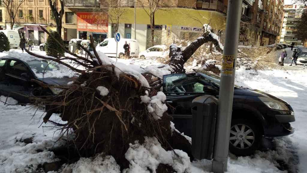 Un coche, en la calle Jaime el Conquistador, sepultado por el tronco de un árbol.