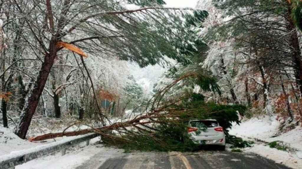 Un árbol cae sobre un coche en Gandesa