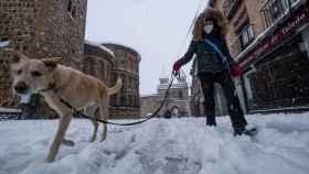 Una persona pasea junto a su perro en Toledo.