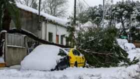 Un árbol caído sobre un coche como consecuencia del temporal   EP