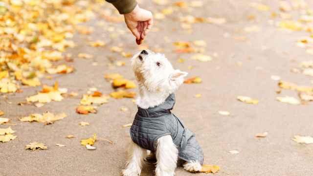 Protege a tu perro del frío con estos consejos y productos