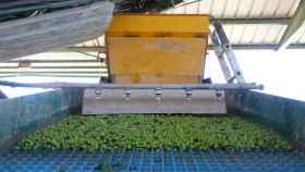 Una máquina trabaja durante un proceso de recolección de aceitunas. Foto: Marga Reig (Pixabay)