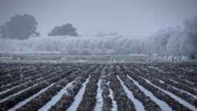 Cultivos con nieve en una imagen de archivo.