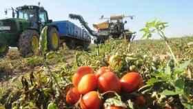 La huerta marroquí se comerá a la española: la letra pequeña de la Ley de la Cadena Alimentaria