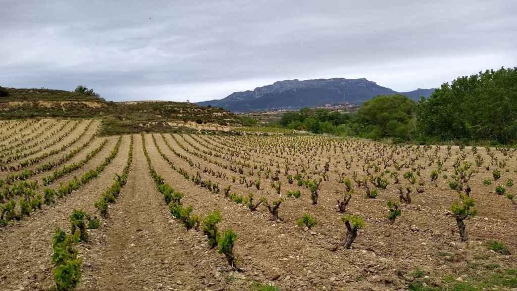 La innovación en el sector agroalimentario tendrá al vino como un protagonista esencial. FOTO: Christopher Winkler (Pixabay)