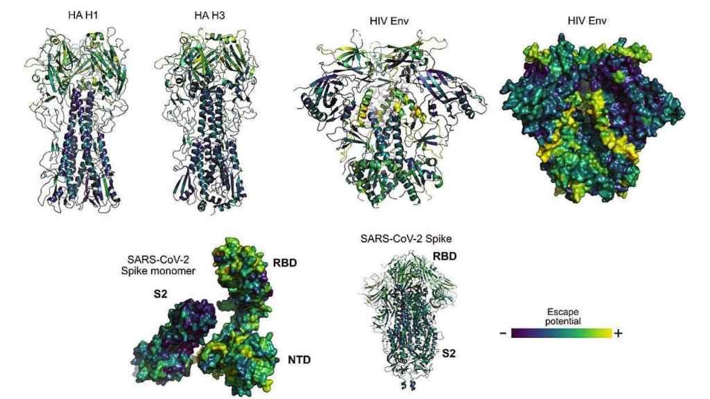 Imágenes de proteínas de virus de la gripe, VIH y SARS-CoV-2 con zonas coloreadas según su potencial para mutar y 'escapar' de la respuesta inmunitaria. / B. Hie et al.-MIT/Science