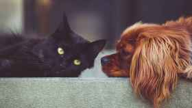 ¿Qué ven los perros y gatos cuando miran la televisión?