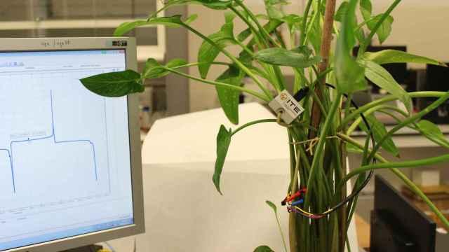 La 'biopila' creada por el ITE para monitorizar el entorno con electricidad generada con savia de las plantas. FOTO: ITE.