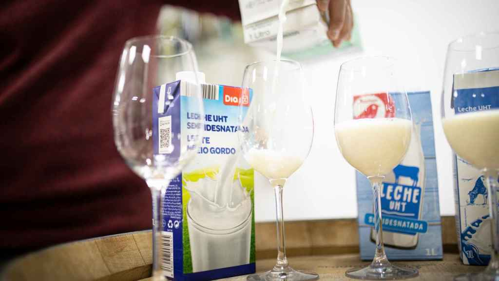 Se sirve la misma cantidad de las leches semidesnatadas para que Carmen pueda realizar la cata.
