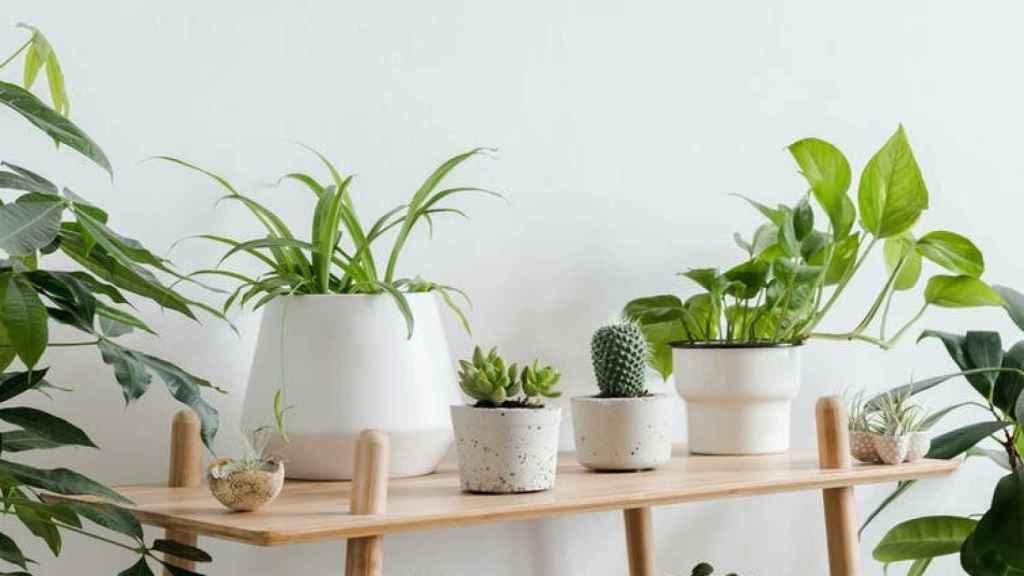 Plantas en una vivienda.