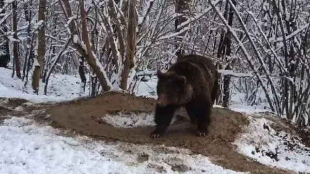 Una captura del vídeo que muestra a Ina caminando en una jaula imaginaria.