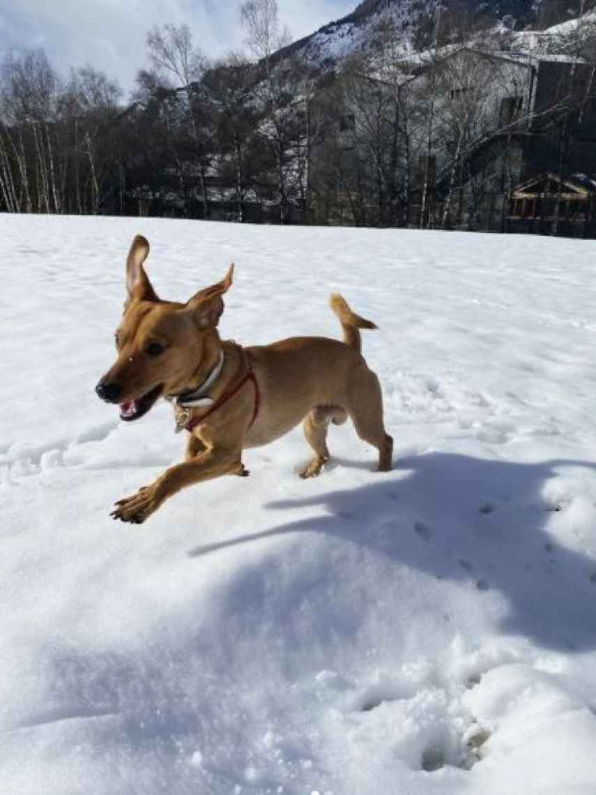 Bobby Puchum, el perrito adoptado de Carolina Monje y Álex Lequio.