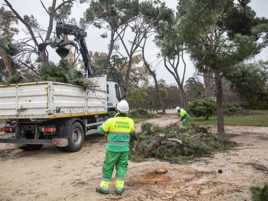 Los operarios trocean con la motosierra los árboles dañados y los transportan en vehículos.