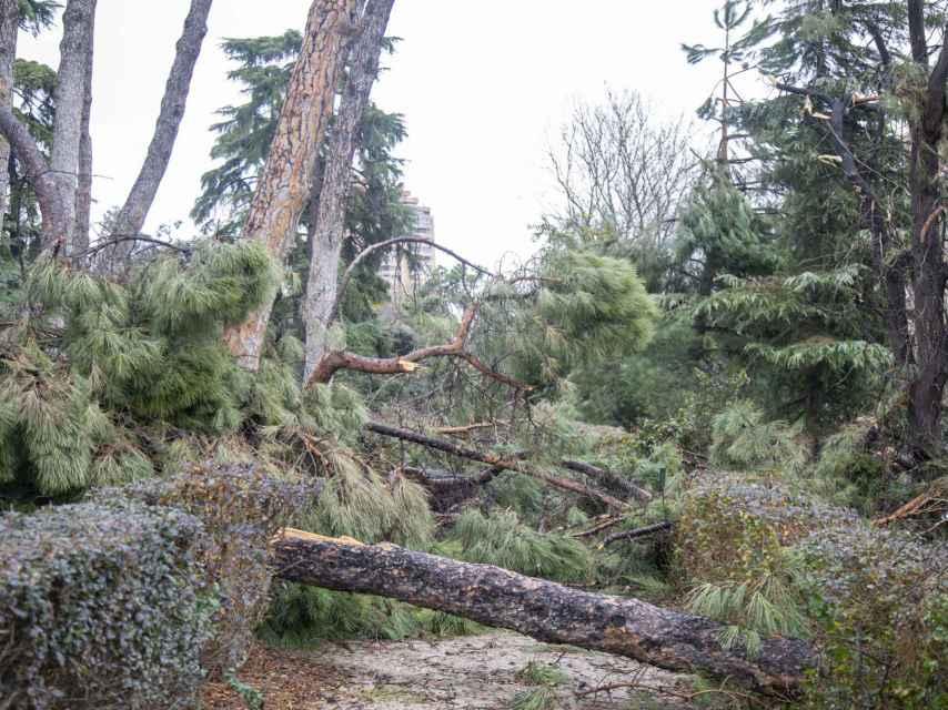 Casi un mes después de Filomena, todavía hay zonas bloqueadas por el desastre.
