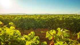 El sector vitivinícola catalán, de los primeros en apostar por la tecnología de RawData.