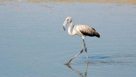 Un viaje por la naturaleza para disfrutar de la observación de aves