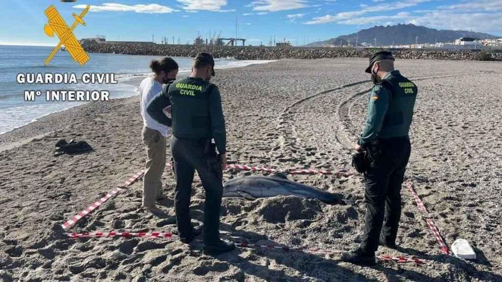 Unos guardias civiles junto a un delfín listado varado en una playa de Almería.
