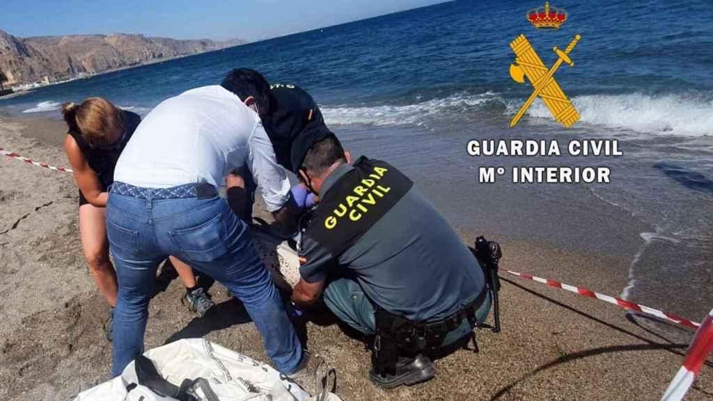 Uno de los últimos cetáceos muertos en el litoral almeriense.