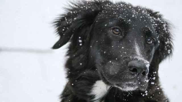Trucos para hacer que tu perro no tenga frío en invierno