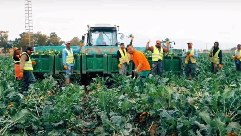 Un grupo de jornaleros en una explotación agrícola de la Región de Murcia.