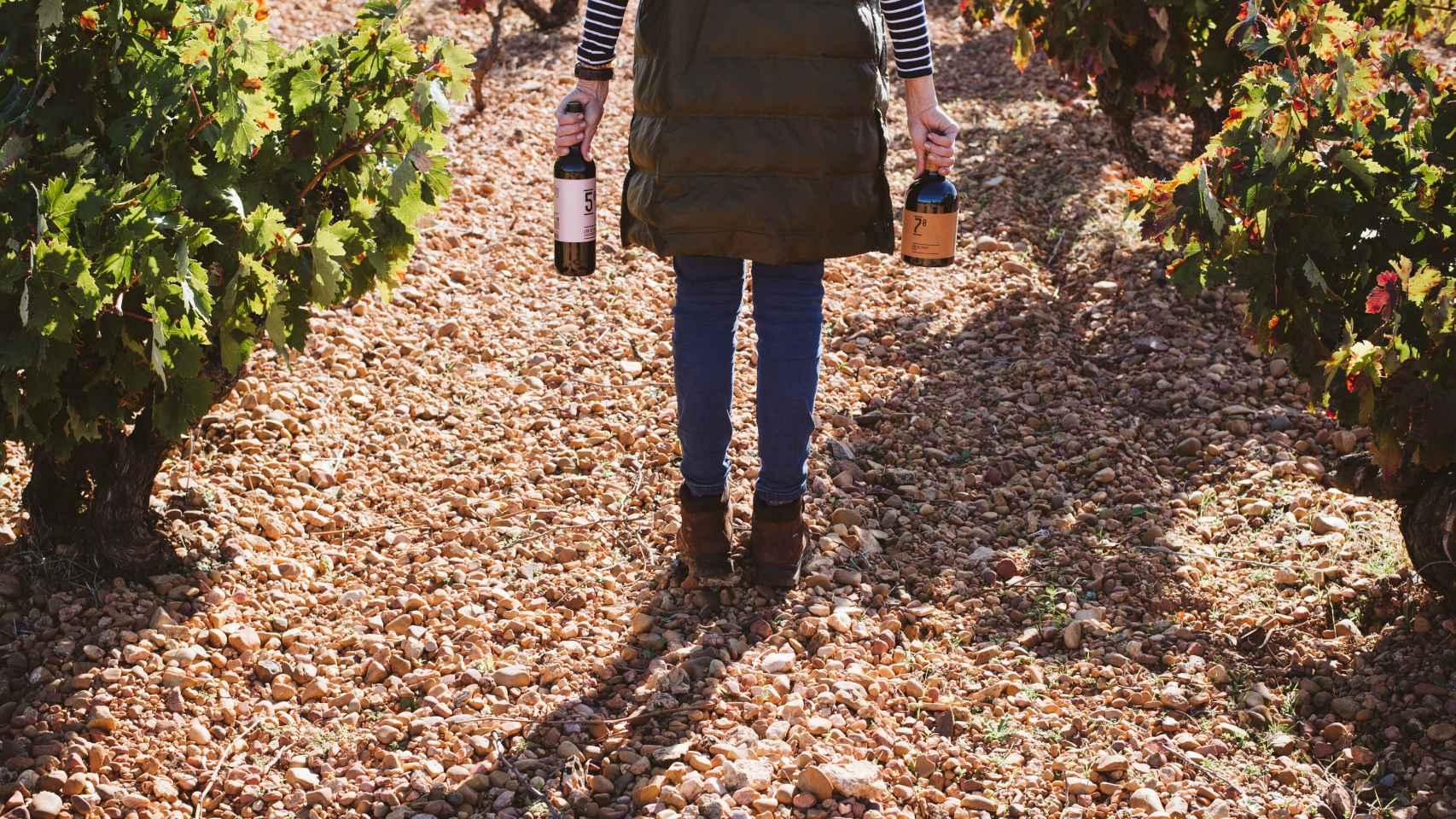 Hay razones de peso para pasarse a los vinos ecológicos.