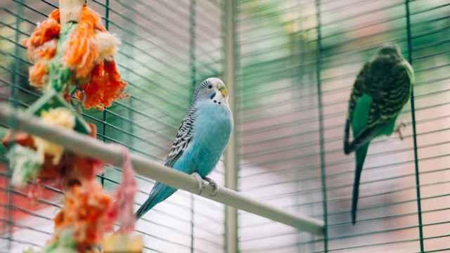 ¿Quieres criar pájaros en casa? Aquí encontrarás las mejores pajareras de Amazon