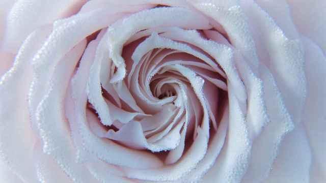 Cómo hacer rosas de papel: la forma más sencilla