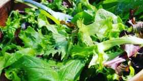 Una ensalada verde con brotes diferentes.