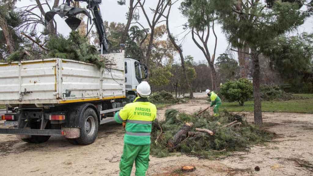 Los operarios trocean con la motosierra los árboles dañados y los transportan en vehículos. Jorge Barreno