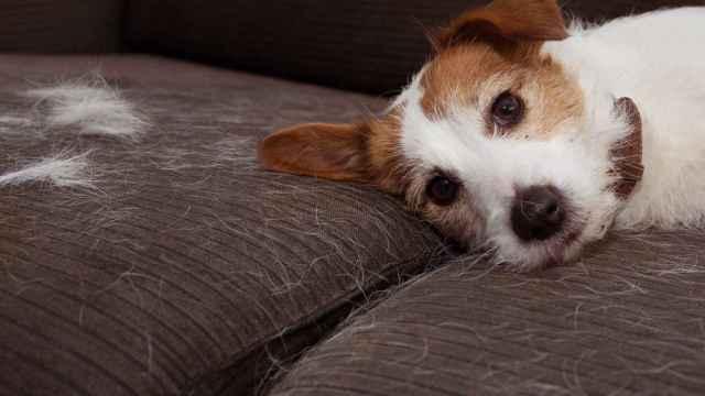 Elimina el pelo de tus mascotas con los quitapelos más vendidos de Amazon