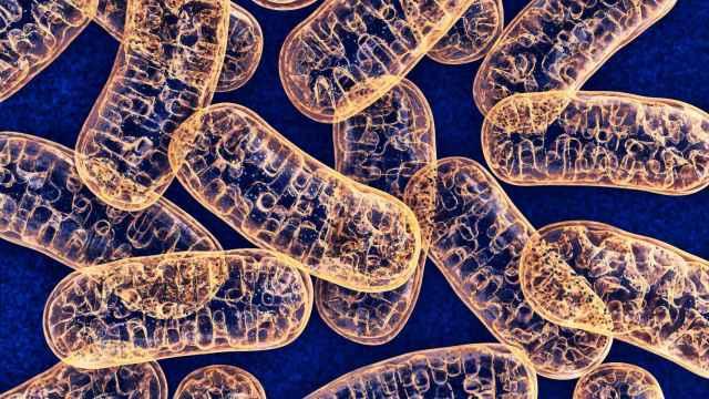 Representación gráfica de unas mitocondrias.