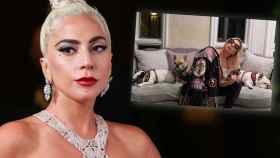 Lady Gaga quiere recuperar a sus dos perros ofreciendo medio millón de dólares.