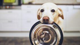 10 alimentos prohibidos para los perros.