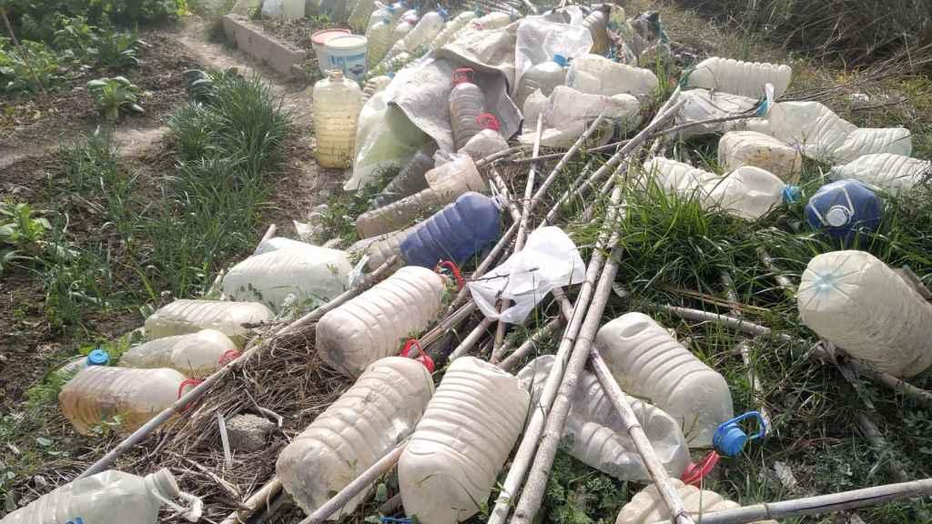 En la parcela se acumulan las garrafas que utilizan para regar el 'huerto okupa'.