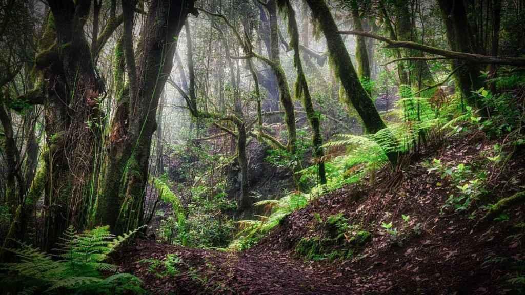 Los bosques El cambio climático y la transformación en los usos del suelo pueden incrementar estas amenazas.